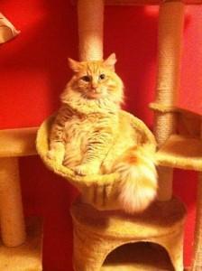 gato gordito