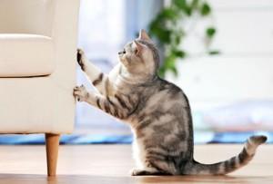 cat-scratching-furniture-300x203