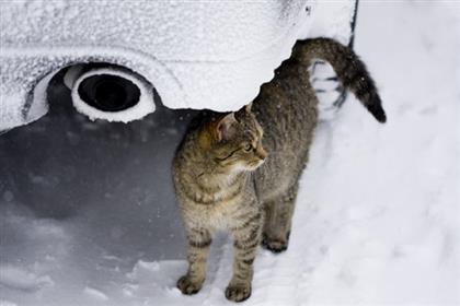freezing-cat-shutterstock 25017517-360.lg