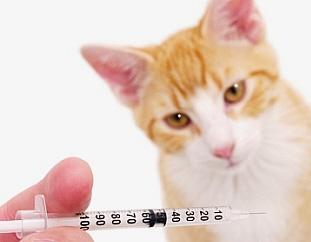 vacuna panleucopenia