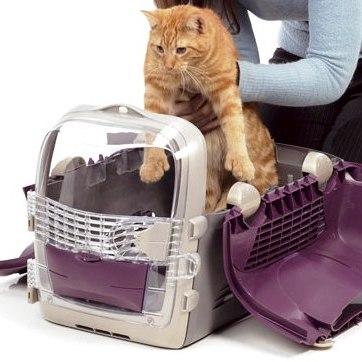 Gato-en-transportin-o-bolso